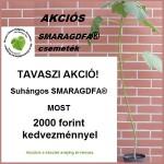 Különleges TAVASZI Akció! – Suhángos Smaragdfa 2000 forint kedvezménnyel