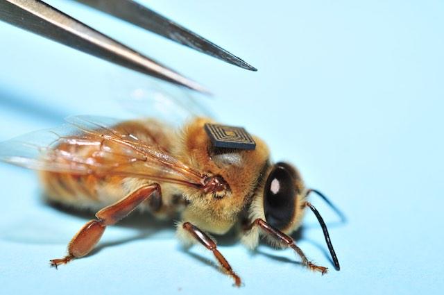 Méhek nyomkövető CSIRO