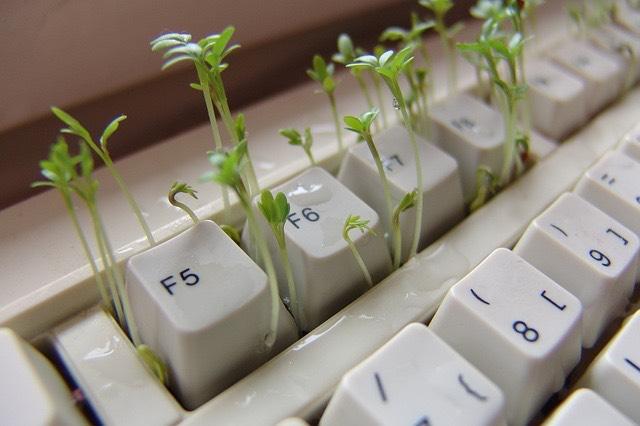 Billentyűzet növény számítógép