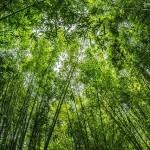 Zöldebbé teszi a Földet a légköri szén-dioxid