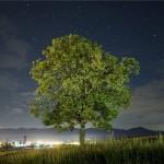 A zöldombudsman törvényt kezdeményezett a fák védelmében