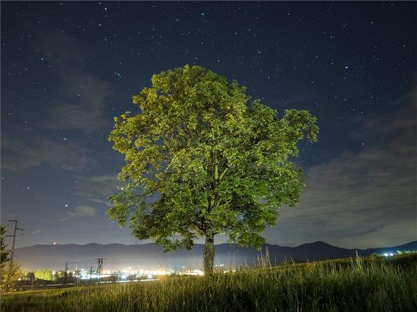 Hosszú expozíciós idővel készült felvételen egy fa látható Mátraverebély-Csengerháza közelében 2016. május 9-én este. Május 10-e a madarak és fák napja Magyarországon. MTI Fotó: Komka Péter