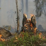 Csak a biztonsági előírásokat betartva szabad tüzet gyújtani az erdőben