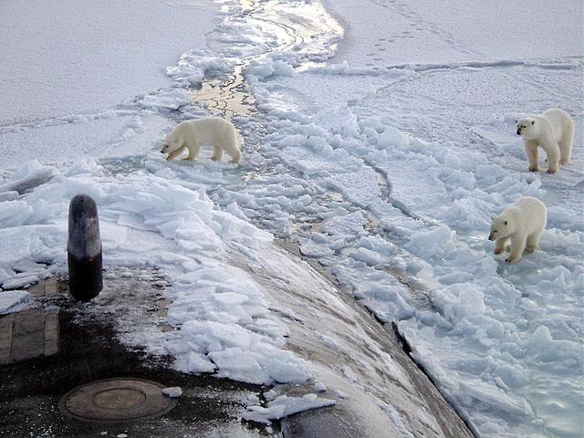 Északi sark jegesmedve tengeralattjáró