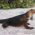 Szélturbinák biztosítják az energiaszükséglet csaknem harmadát a Galápagos-szigeteken