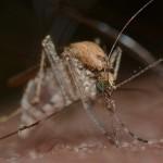Búcsúzik a nyár és a szúnyogírtás