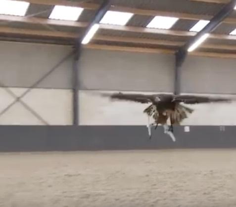 Hollandia sasok drónok
