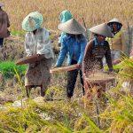 A mezőgazdaságnak is tennie kell a káros üvegházhatású gázkibocsátás csökkentéséért