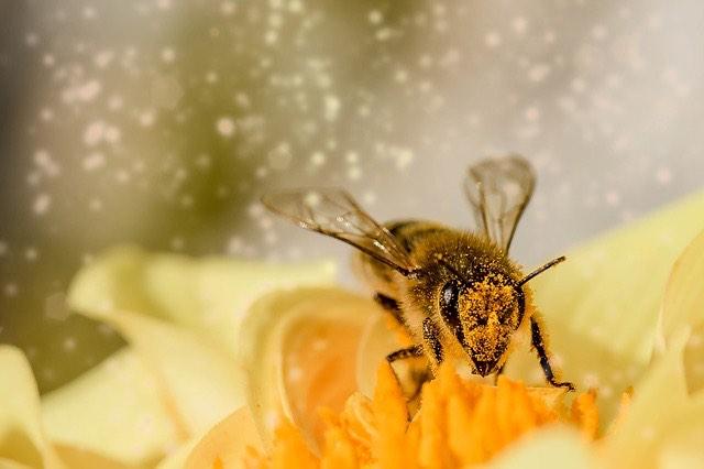 méhek virág beporzás