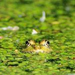 Európa vizes élőhelyeinek kétharmada eltűnt