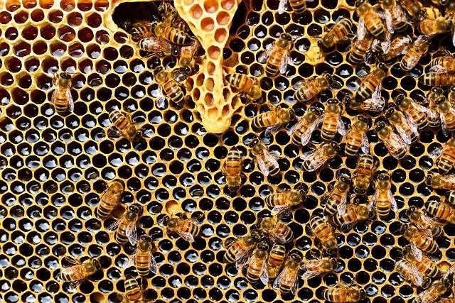 méhek kaptár