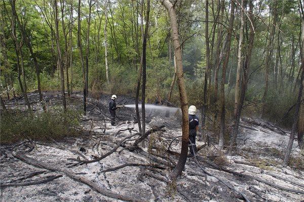 A Kiskunsági Nemzeti Parkban  2015.  július 24-én keletkezett tűz ötven hektárt érintett. MTI Fotó: BMOKF