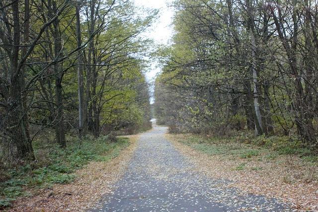 Erdő Csernobil mellett. kép: Kyle Taylor