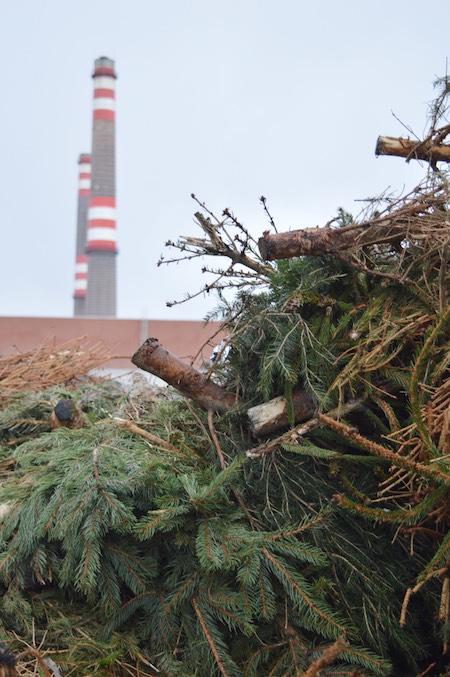 karácsonyfa Pécsi erőmű