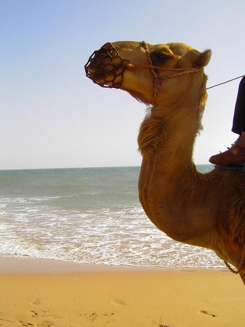 Teve sivatag tenger