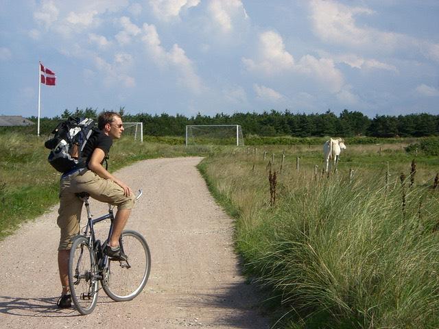 Dánia tehén bicikli