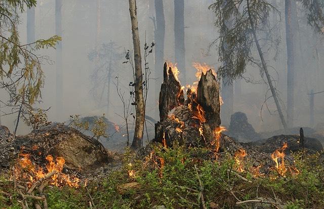 Erdőtűz tűzgyujtás