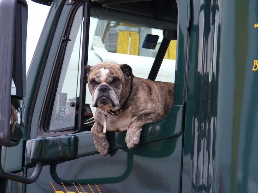 bulldog teherauto